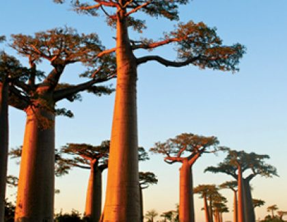 Madagascar The Beautiful