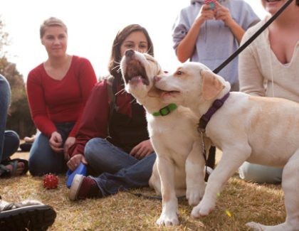 Puppies, Ice Cream, and Free Stuff: Proven Stress Relief Strategies