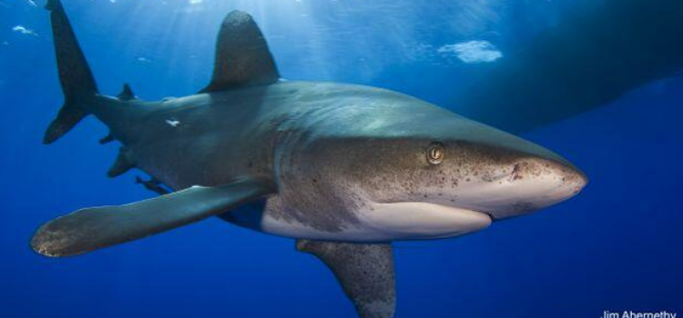 College's Shark Experts Present at Sharks International Symposium