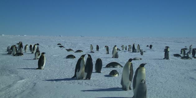 penguins-featured-2