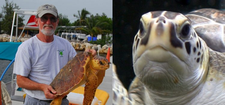 Biology Professor's Career Devoted to Studying, Rescuing Sea Turtles