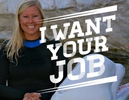 I Want Your Job: Dolphin Trainer