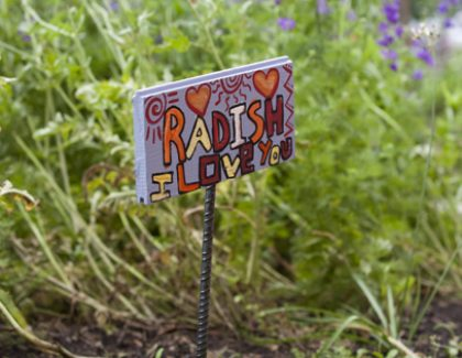 College of Charleston-Based Farm-To-School Initiative is Set to Go Statewide