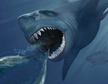 The Man, the Myth, the Shark