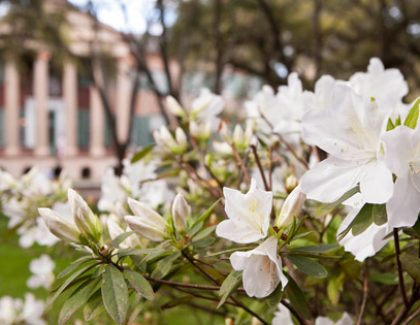 Slideshow: Colors of Spring on Campus