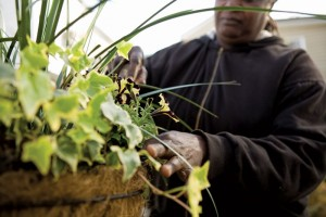 CofC Gardening