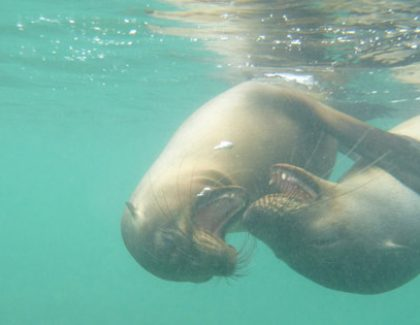 Slideshow: Students Swim with Galapagos Sea Lions
