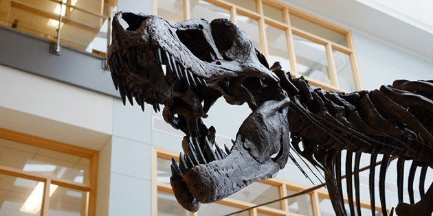 New Geology Professors Bring T. Rex to the College