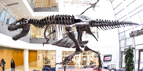 """Bucky"" the T. rex hovers over students in the lobby of the School of Sciences and Mathematics Building."