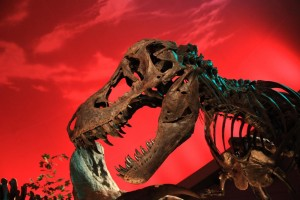 """Bucky"" the T. rex was originally on dispaly at the Children's Museum of Indianapolis."