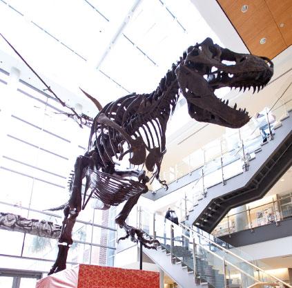 Bucky the T. Rex, College of Charleston