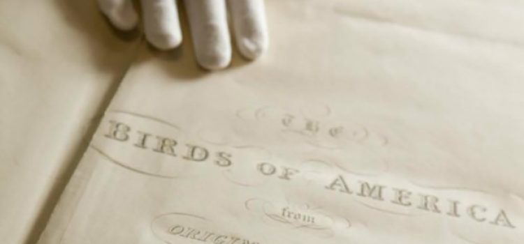 Audubon Letter Offers Insight Into Iconic Paintings