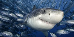 For One Professor, Shark Week is Every Week