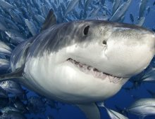 Quiz: What CofC-Discovered Shark Are You?