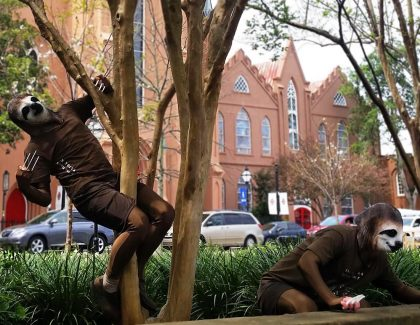Sloths Invade Charleston … Slowly