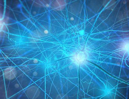 Professor Wins Federal Grant to Study Nerve Regeneration