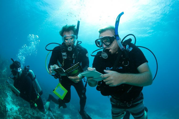 Exploring the coral reef ecosystem
