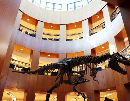 T. Rex Takes Up Residence in Addlestone Library