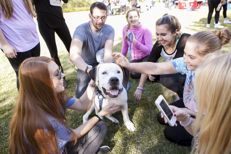 Cougar Countdown Helps Students Stress Less With Puppies, Free Coffee
