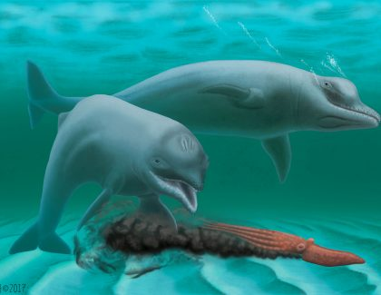 CofC Professor, Other Scientists Discover New Species of Dolphin