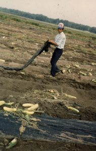 Agricultural worker, Wadmalaw Island, 1996, courtesy of Marina López.