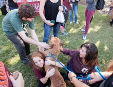 Cougar Countdown Hosts a Pride of Stress-Relieving Activities During Exam Week