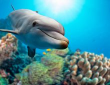 Professor's Research Shows Dolphins Exposed to Chemicals