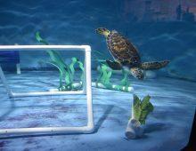 Student Garden Supplies Lettuce to Sea Turtles