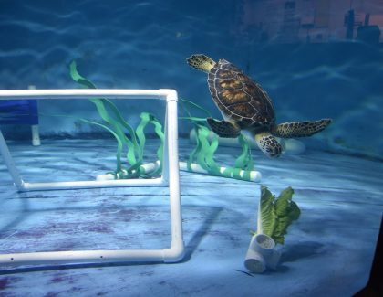 Student Garden Supplies Lettuce to Sea Turtles