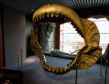 New Research Looks at the Death of Megalodon