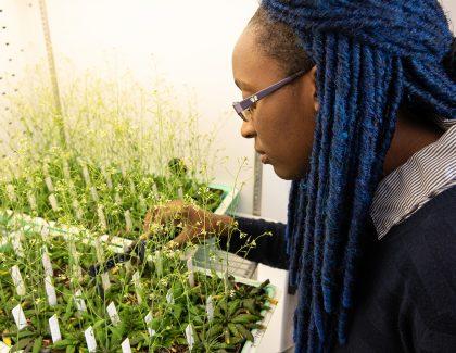 SCAMP Program Empowers Minority Students in STEM Fields