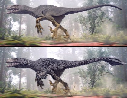 CofC Researcher Says Sex Appeal Made Some Dinosaurs Fly
