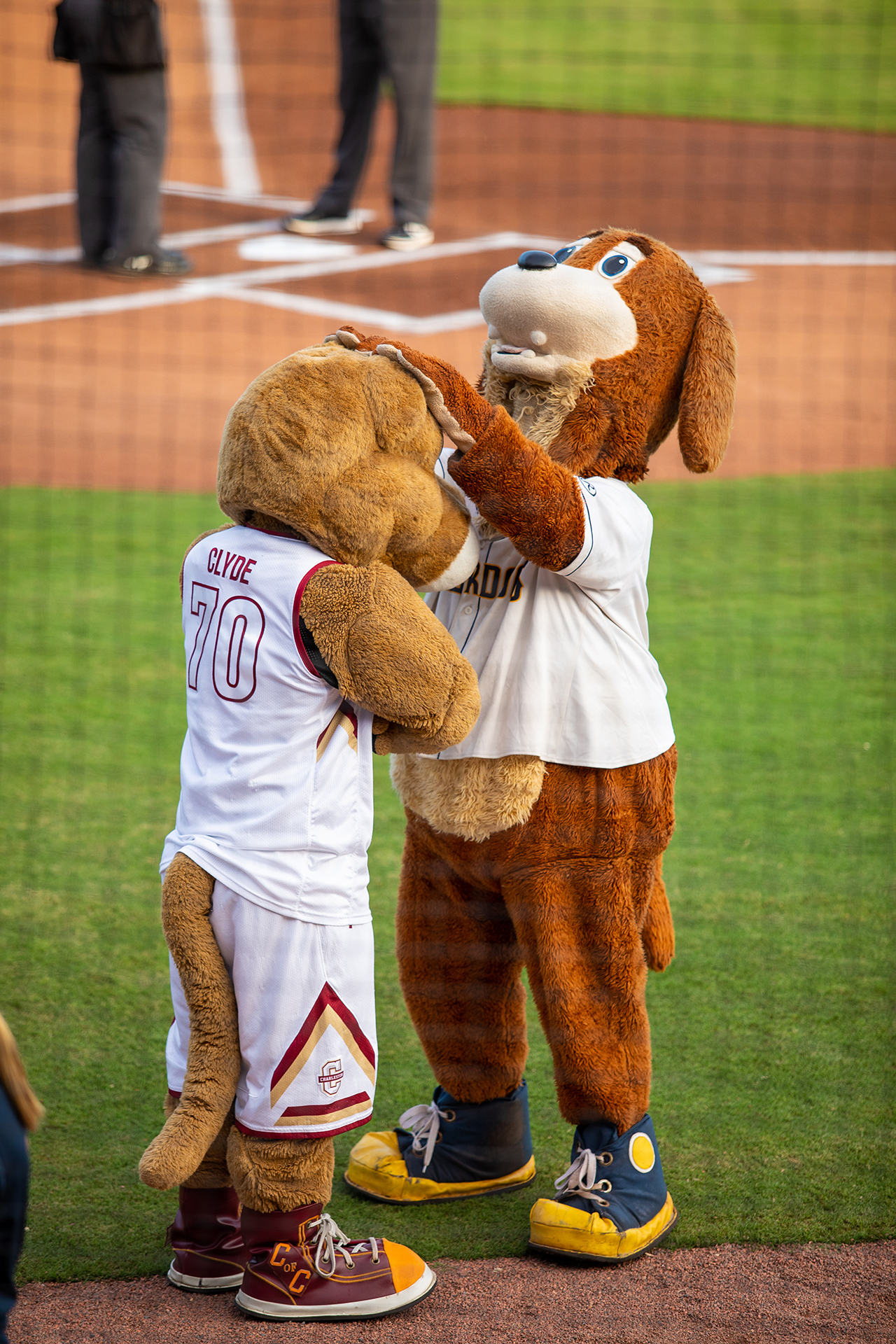 Charlie the RiverDog pets Clyde the Cougar at a RiverDogs game