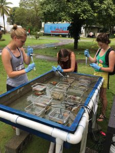 Abby Stephens, Samantha Czwalina and Bailey Fallon conduct research.