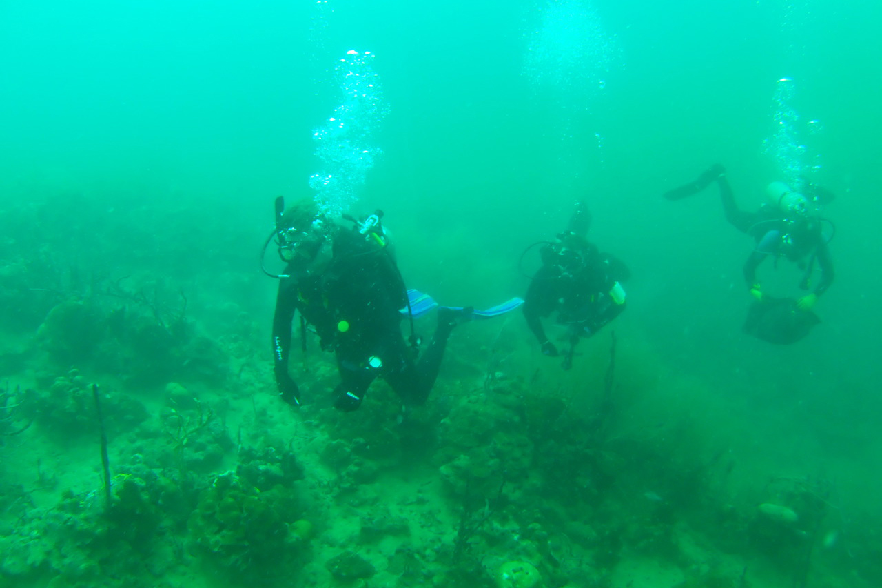 Students scuba dive off the coast of Panama to study coral reef ecology.