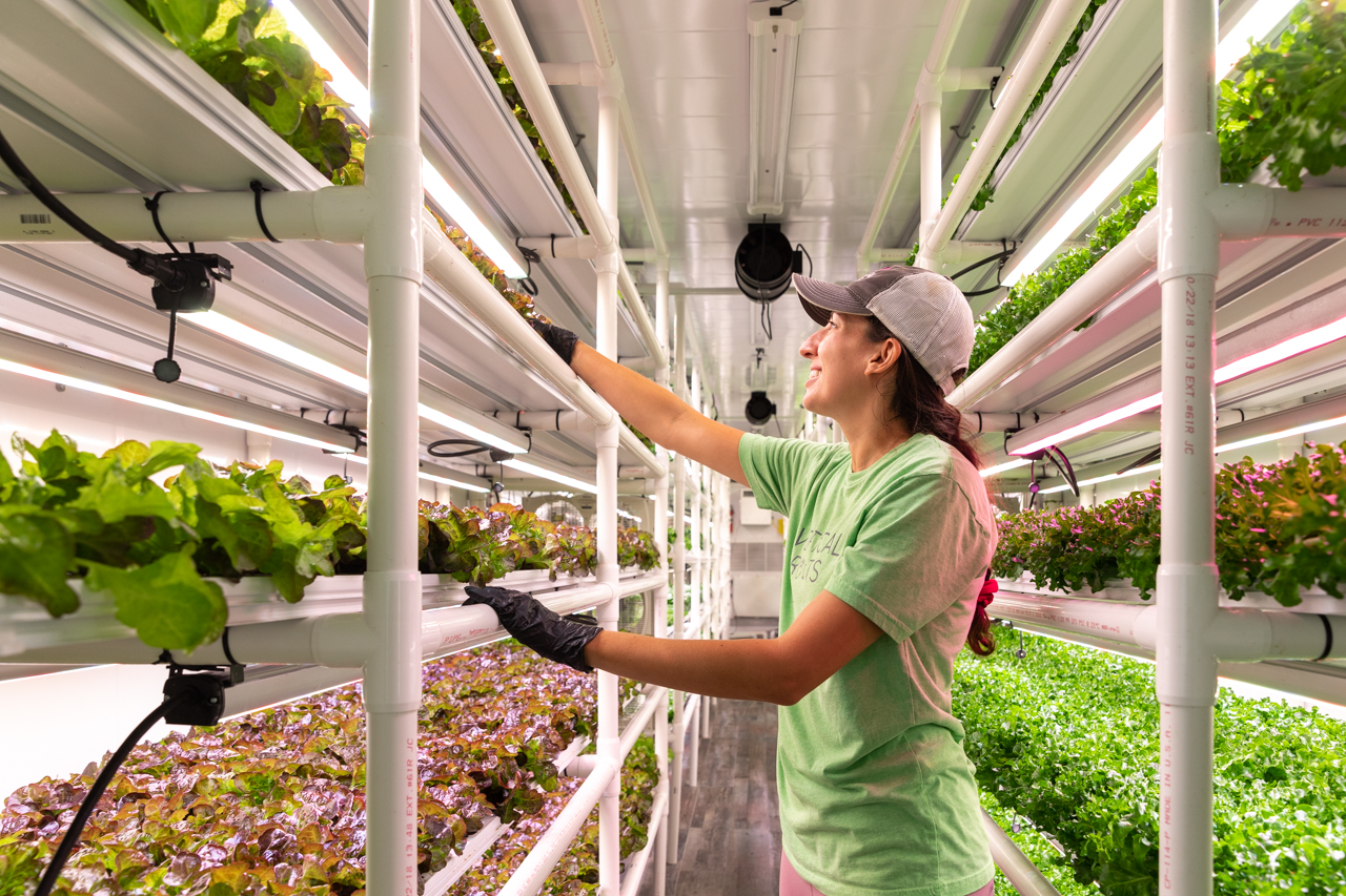 Makenna Coon ('16) a College of Charleston Alumni with a Biology and minor in Environmental Studies degree tends to lettuce in the Vertical Roots Hydroponic Farm's pod.