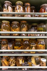 Specimens in the Fish and Invertebrate Collection at Grice Marine Lab