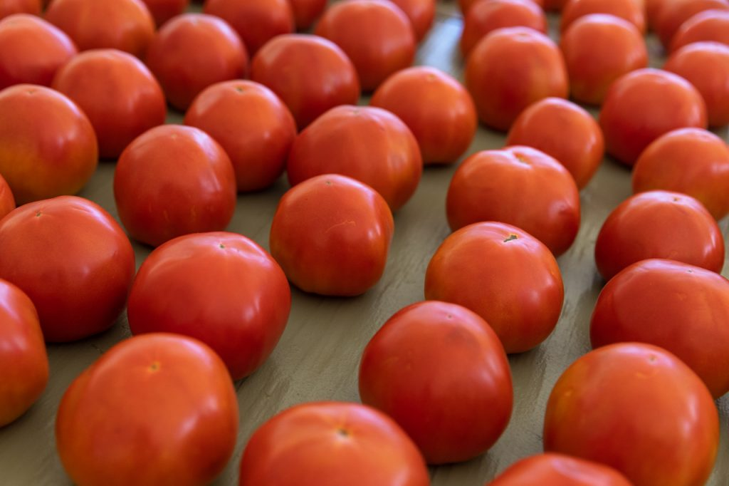 Tomatoes from Rosebank Farms.