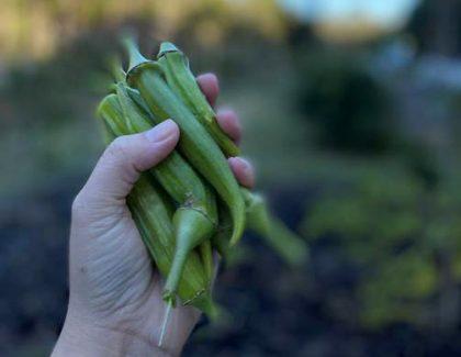 Student Garden Donates Harvest to Homeless Shelter