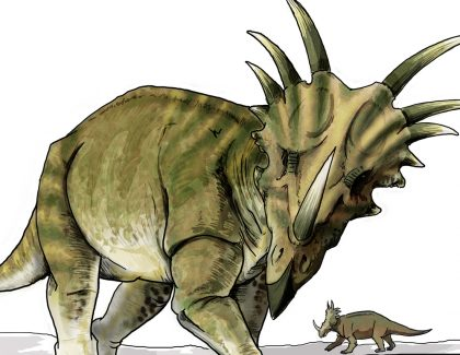 Professor Uncovers New Information on Horned Dinosaurs
