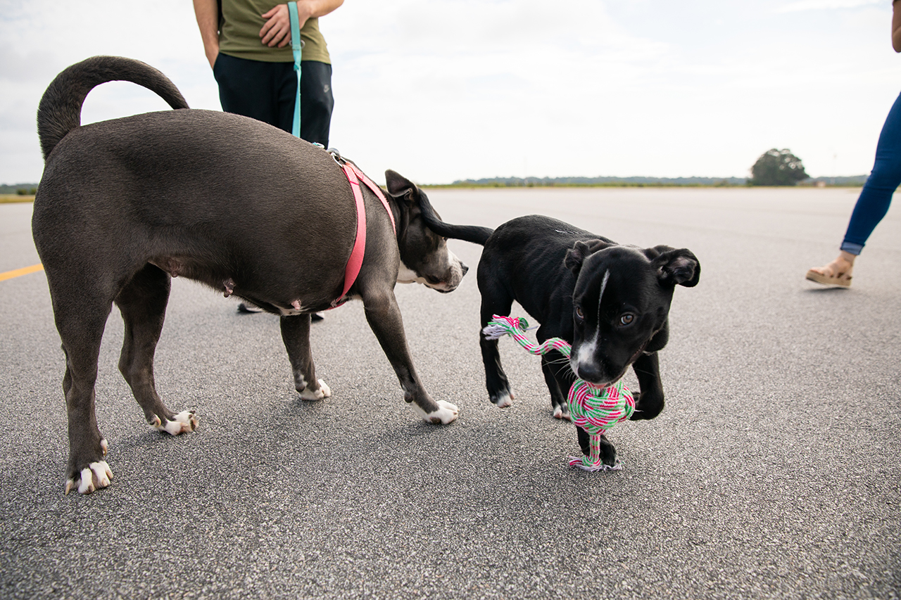 Two rescue dogs on the runway
