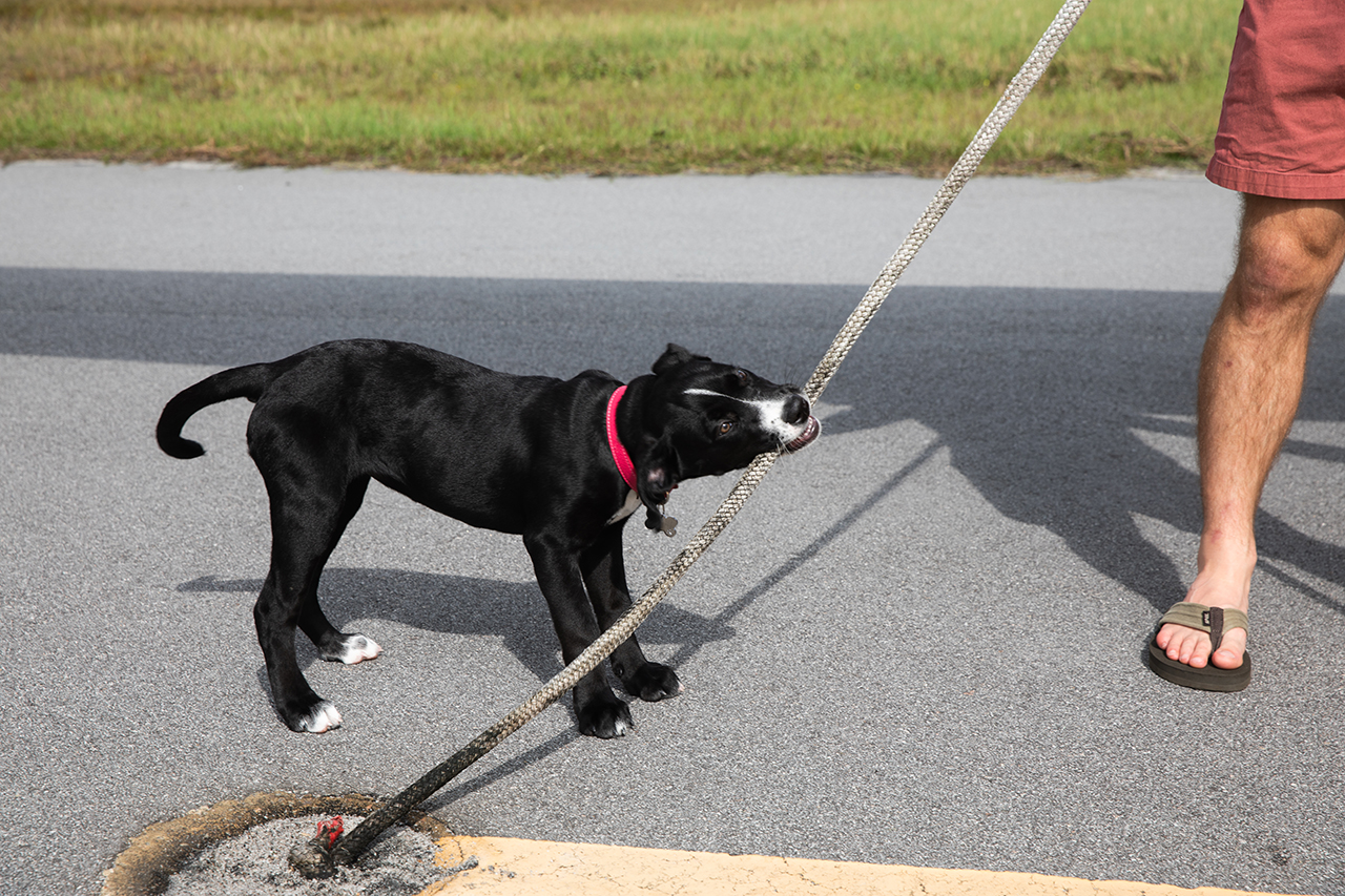 a small black dog