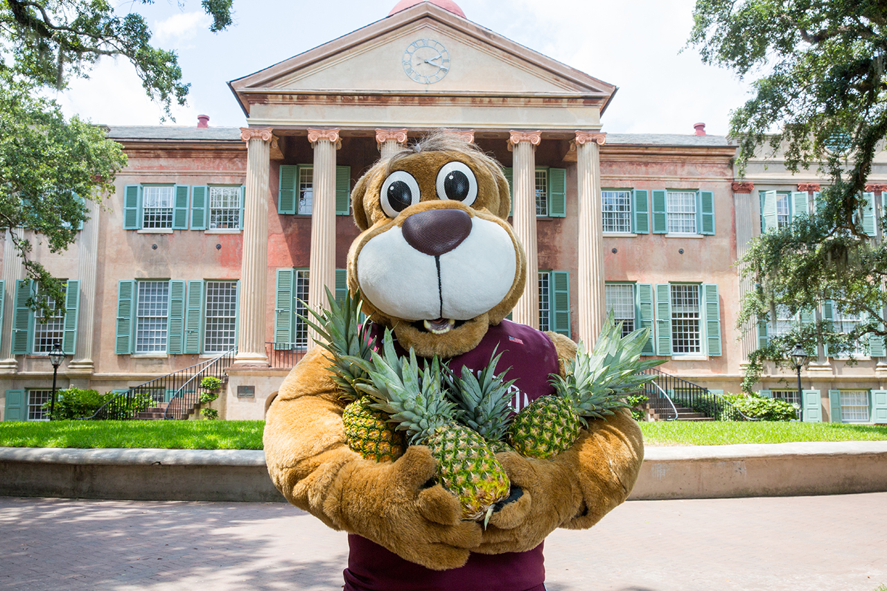 Clyde the Cougar Welcomes to CofC with Pineapples