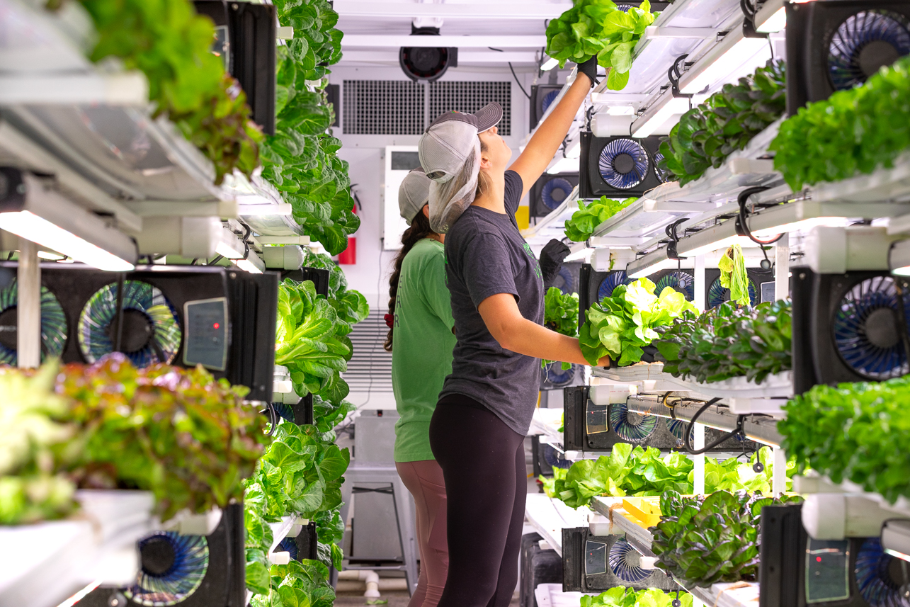 Mary Bryan ('21) and McKenna Coon ('16) pick lettuce from the shelves inside the Vertical Roots pod.
