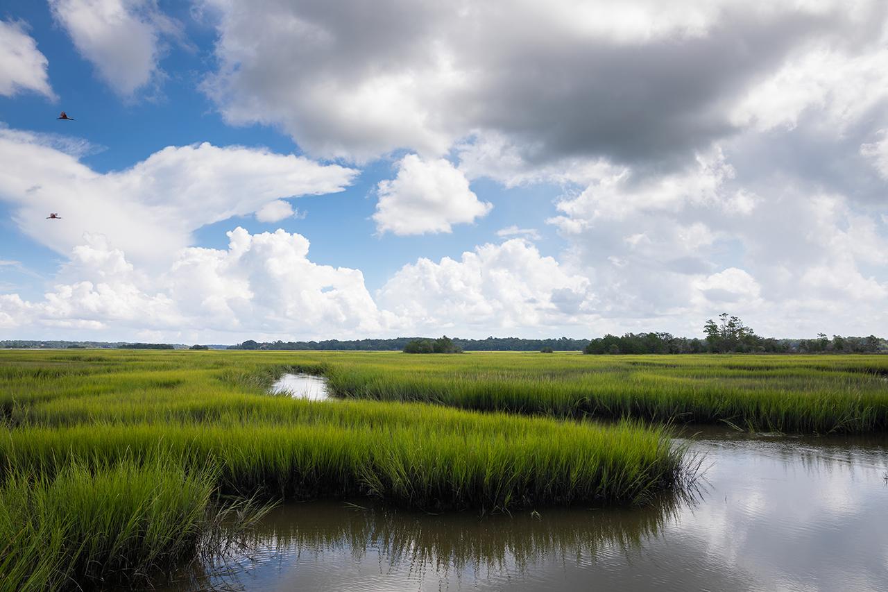 stono preserve marshlands