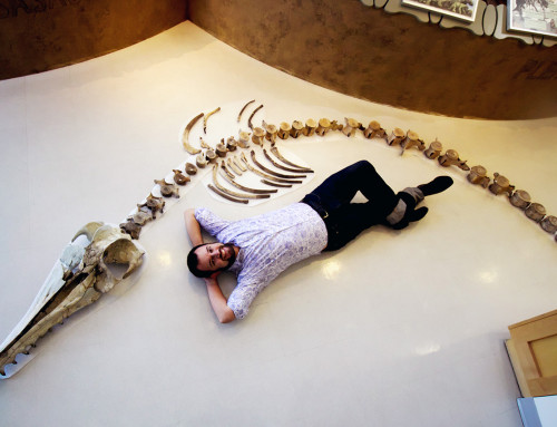 Ancient Dolphin Skeleton Advances Research of Species' Evolution