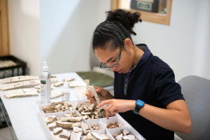 a student examines a fossil in the Mace Brown Museum of Natural History.