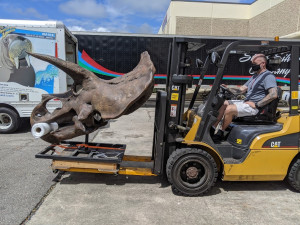 Central Stores Transporting Dinosaurs