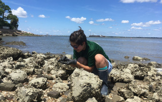 Hails Tanaka Conducts Summer Research at Grice Marine Lab