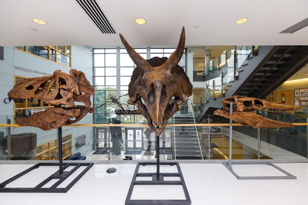 from left, Tyrannosaurus, triceratops and Tylosaurus